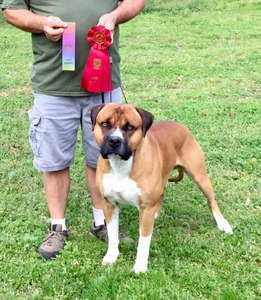 NAKC Show Grand Champion BOB & Group Wins