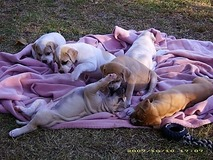 Pups in a blanket