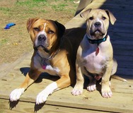 Red Dog & Jekyll