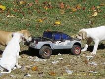 Puppy trucking